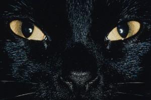 Milliókat örökölt egy macska