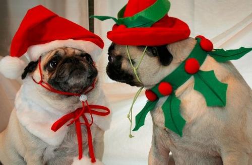 Karácsony és kutya