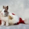 A karácsony és a nyuszi