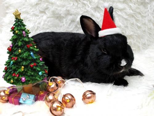 rabbit-1567779_1280
