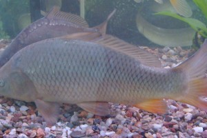 Borzasztó körülmények a halas pultoknál