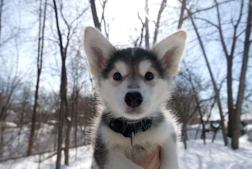 kutya-1