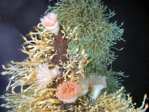 j_faj-ragadozo-tengeri-csillag