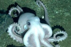 Új polipfajt fedeztek fel az Antarktisznál