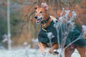 Hogyan óvjuk kutyánkat télen?