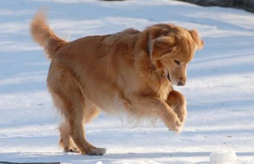 kutya téli lábápolása