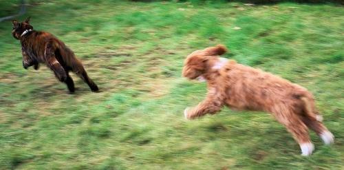 kutya macskát kerget