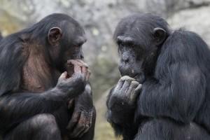 Utolérnek minket a majmok?