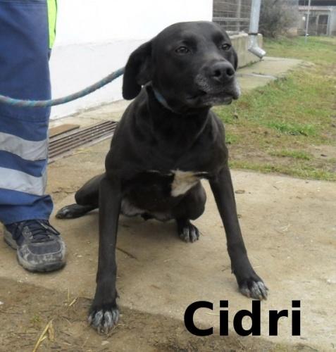 cidri__1_