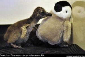 Pingvinbébik és a plüssmama - cuki fotók!