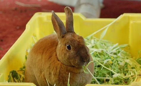 nyuszi salátát eszik