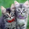 Milyen a macska, amikor rosszkedvű vagy boldog?