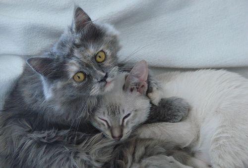 macskaszeretet