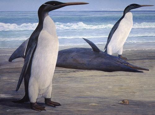 kairuku-penguins-120227