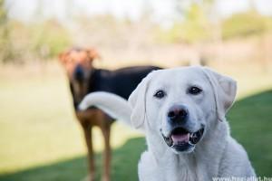 Adónk 1%-át most már a Pilis-Budai Kutyamentőknek is ajánlhatjuk
