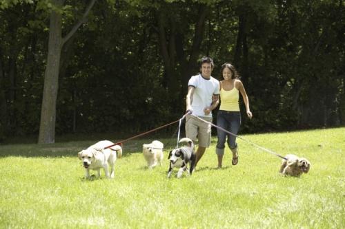 kutyatartas-kutya-3.jpg