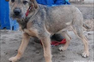 Mit tegyünk a talált kutyával?