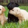 Hogyan szocializáljuk a kutyakölyköt?