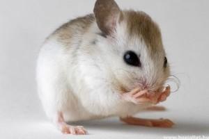 Az egerek is énekelnek