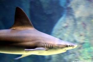 Életmentő műtétét hajtottak végre a Nyíregyházi Állatpark cápáján