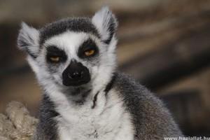 Két katta született a Debreceni Állatkertben