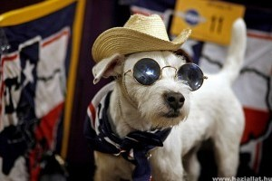 Napszemüveg készül kutyáknak