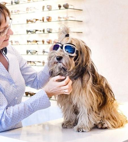napszemuveg_kutyaknak