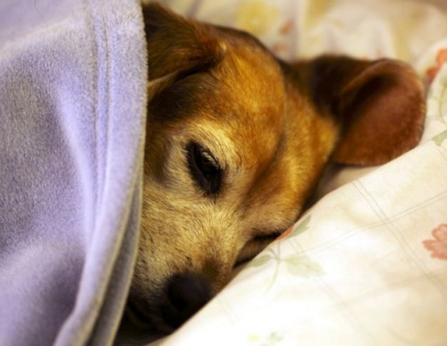 kutya betegség szopornyica