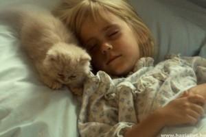 Mit csinál a macska, amíg mi alszunk? - Videóval