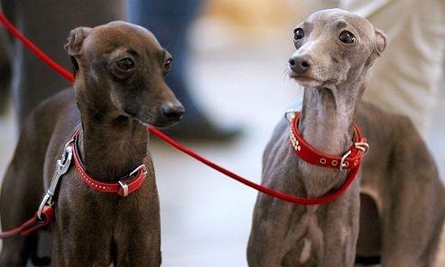 Miskolc Marathon Dogshow
