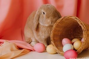 Akár 10 kilósra is nőhet a húsvéti nyúl
