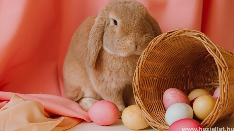 A húsvéti nyúl akár 10 kilósra is nőhet!