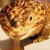 Negyven új faj Madagaszkáron