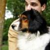 Módosított állatvédelmi törvény- Működik a gyakorlatban?