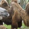 Hófehér tevecsikók születtek a Nyíregyházi Állatparkban