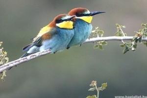 Mi legyen az év madara 2013-ban?