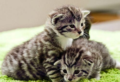 Veszélyes-e a macska a terhesség során