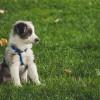 A kutya féreghajtása: mikor, hogyan, mivel