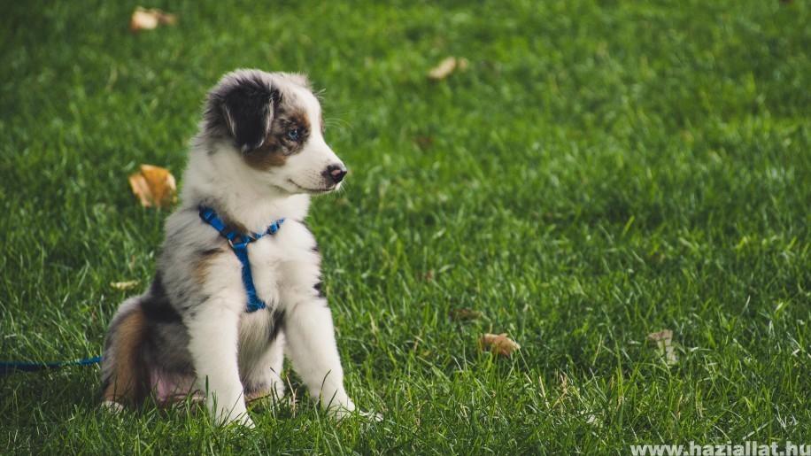 Mikor és hogyan kell végezni a kutya féreghajtását?