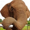 Ormányával harmonikázik Shanti, az elefánt