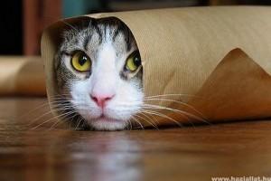 Legviccesebb pillanatok a macskák életéből - Videóval