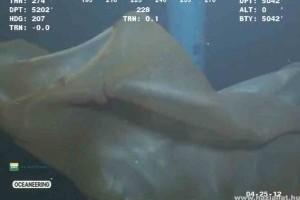 Halászhálónak hitték a különleges óriásmedúzát - Videóval