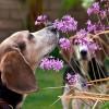 Állatbarát megoldások a kertekben
