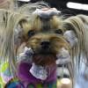 Húszezer eb a salzburgi kutya-világkiállításon