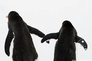 Tojást kapott az egynemű pingvinpár