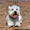 Gyere, nyaralj te is a kutyáddal a Balatonon!