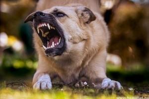 Mit tehetünk kutyatámadás ellen?
