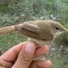 Soha nem látott veszélyben Amazónia madárvilága