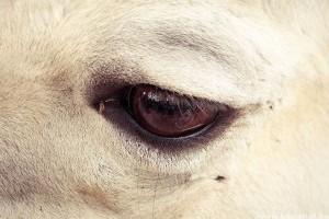 Szigorodik az állatvédelmi törvény - Többszázezres bírságok jönnek
