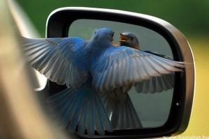 (Színek szerint) tojnak a kocsinkra a madarak